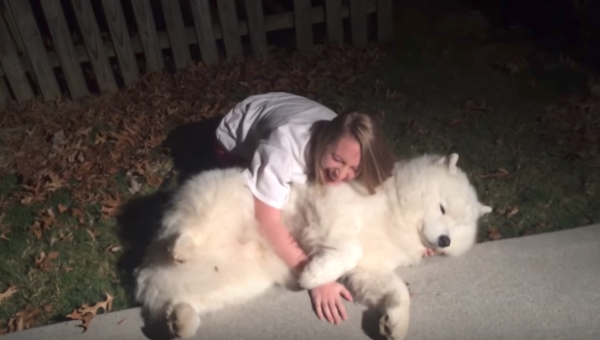 Cold-Loving Samoyed Won't Move a Muscle to Go Inside [Video]