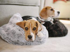 P.L.A.Y. Snuggle Pet Bed