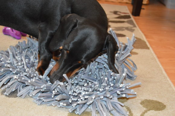 True Story I Ve Tried Tons Of Puzzle Toys For My Dogs And