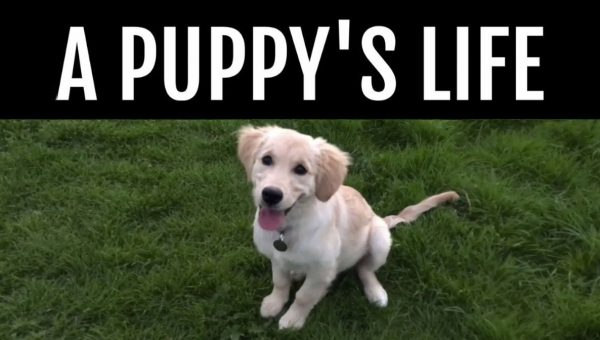 Viral Video Shows Withdrawn Puppy Blossom and Grow Up in Just Seconds
