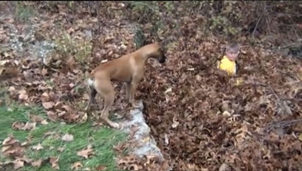 Boy and His Dog Have a Blast in Epic Leaf Pile [Video]