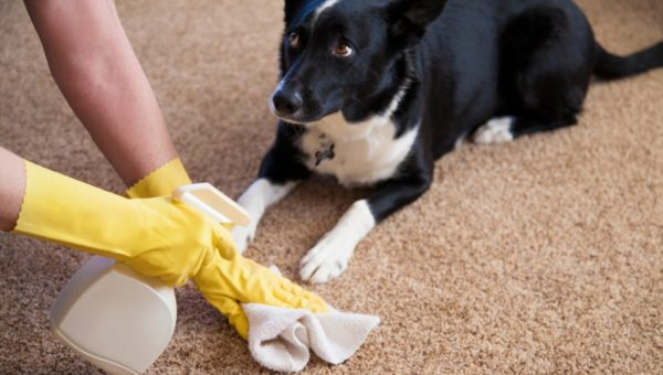 Our 5 Best Tricks for Getting Rid of That Dog Pee Smell