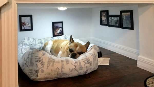 8 Fancy Dog Bedrooms That Will Make Your Dog Jealous
