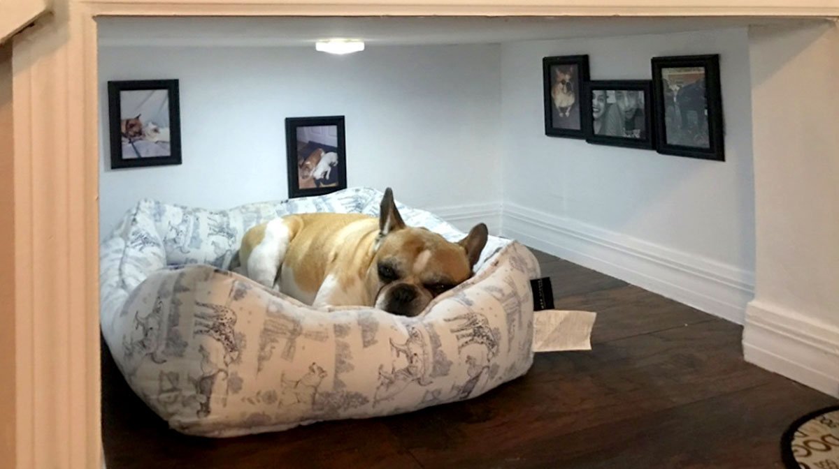 8 Fancy Dog Bedrooms That Will Make Your Dog Jealous The Dog People By Rover Com