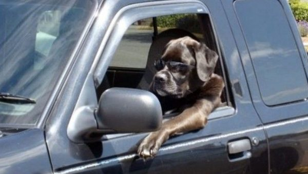 How to Help a Dog with Car Anxiety