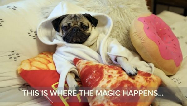 doug the pug shows off totally rad pizza party pad in mtv cribs sendup video