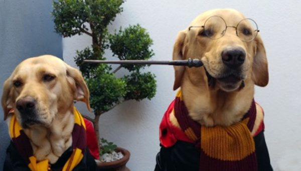 Amazing Dog Knows Every Spell Taught at Hogwarts [Video]