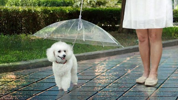 7 Weirdly Amazing Items to Help Your Dog Stand Out from the Crowd