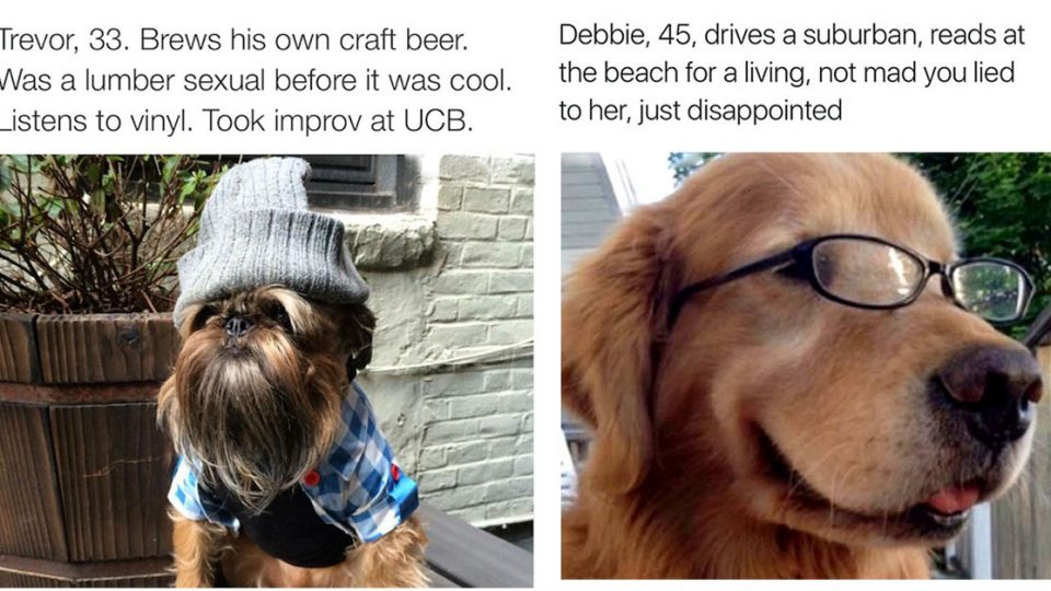 These Excellent Dog Bios Are So On Point You Can T Help But Laugh The People By Rover