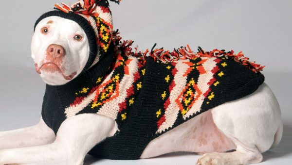 People Are Keeping Their Dogs Cozy in Fresh Fall Sweaters We Can't Resist
