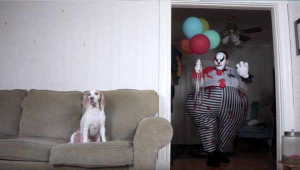 Video Series Shows This Beagle Ain't Afraid of No Ghost, Skeleton, or Creepy Clown