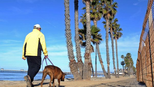 Top 5 Dog Parks and Dog Beaches in San Clemente, CA