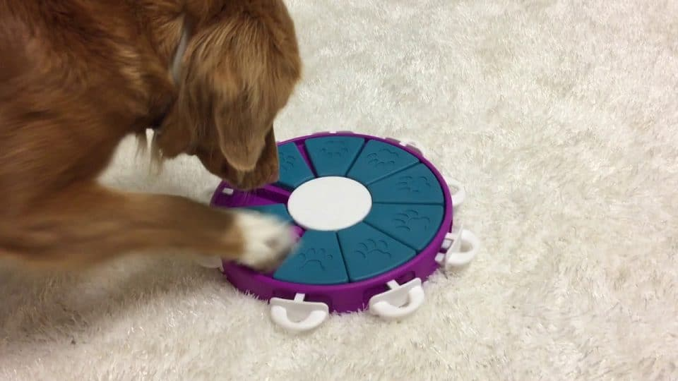 The 10 Best Puzzle Toys That Actually Help Bored Dogs The Dog