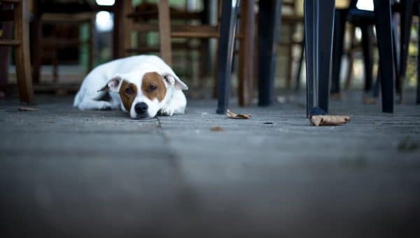 Top 10 Dog-Friendly Restaurants in San Diego