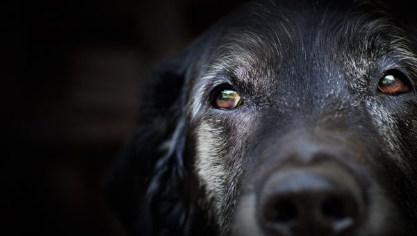How Much Do Dogs Really Remember?