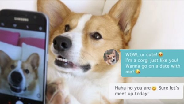 What Happens When a Corgi Tries Tinder? Now We Know [Video]
