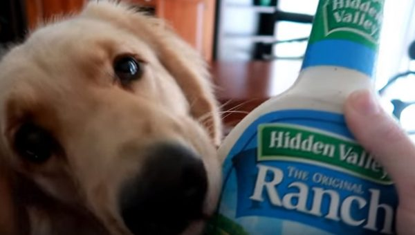 Service Dog Accidentally Brings Mom Ranch Dressing Instead of Water Bottle [Video]