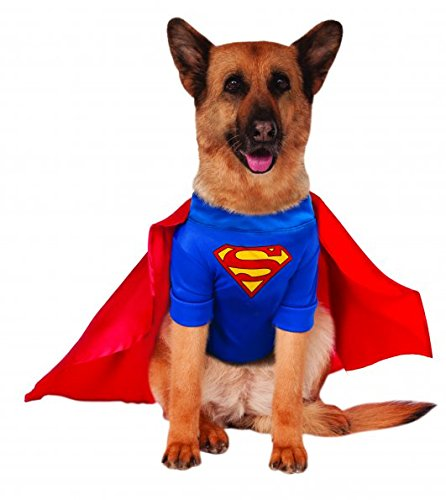 A German shepherd dressed in a Superman large dog costume.