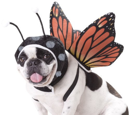 Puggerfly small dog Halloween costume