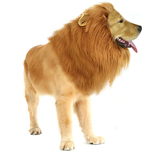 a dog wears a lion mane an easy large dog costume