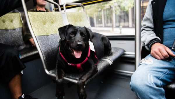 Meet the Dog Who Rides the Bus to the Park All by Herself