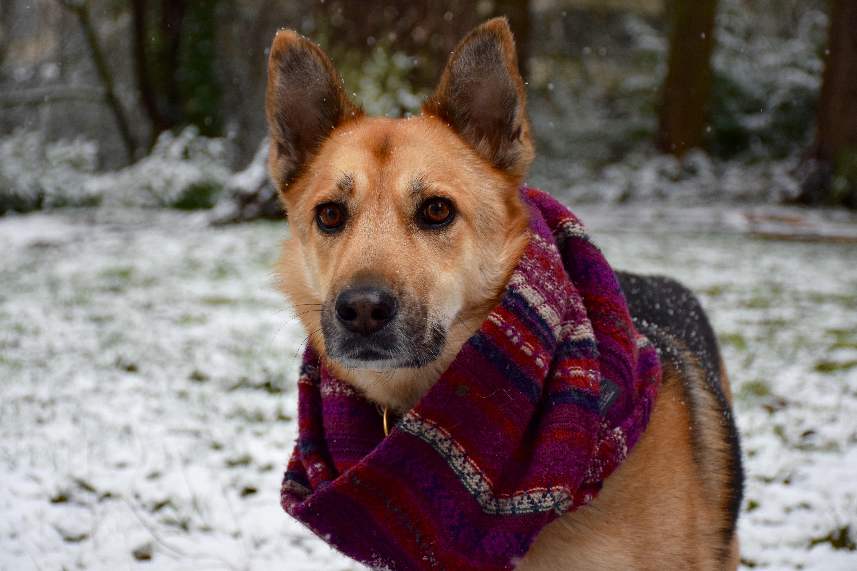 German Shepherd Dog Names 25 Best Names For German Shepherds