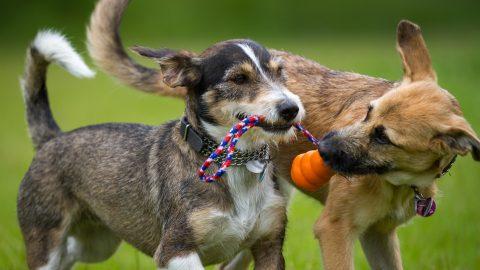 A to Z Dog Enrichment