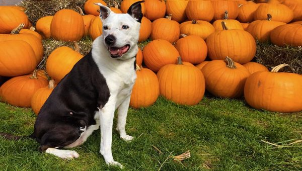 Can You Take Your Dog to a Pumpkin Patch?