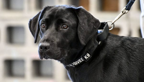 CIA Trainee Dog Demoted from Bomb Sniffer to Best Friend