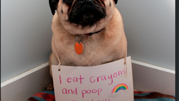 What to Do When Your Dog Eats a Crayon