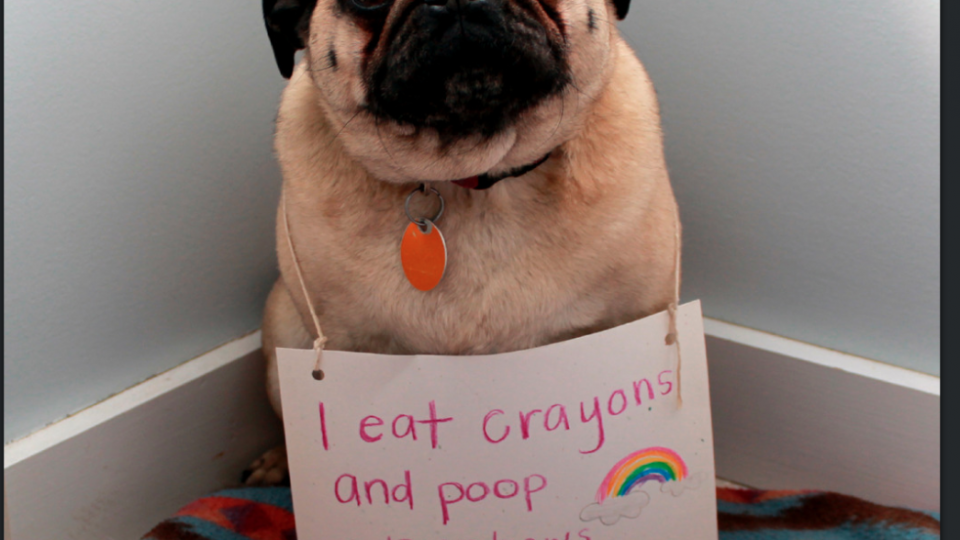 what to do when your dog eats a crayon the dog people by rover com