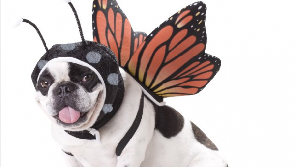 Our 10 Favorite Easy Halloween Costumes for Small Dogs