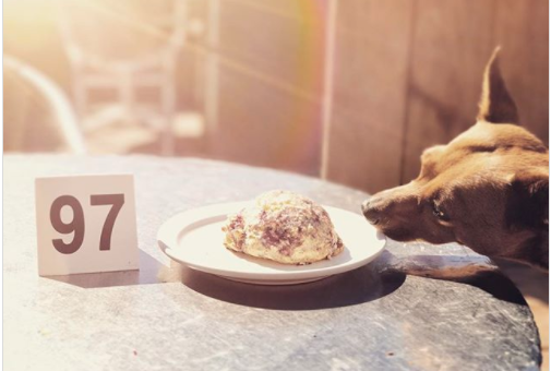 Top 10 Dog-Friendly Restaurants in Santa Cruz