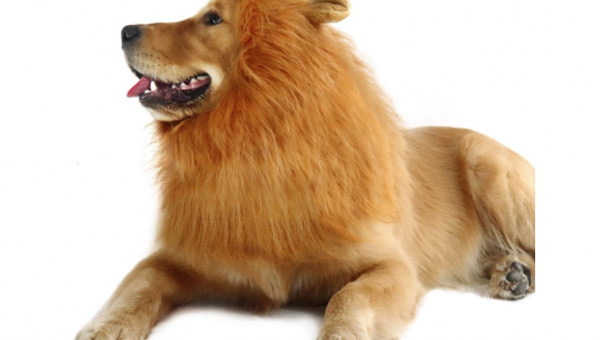 8 Adorable Halloween Costumes for Large Dogs