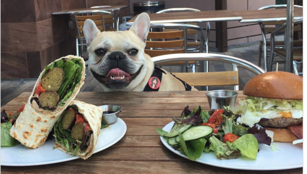 Top 5 Dog-Friendly Restaurants in Las Vegas