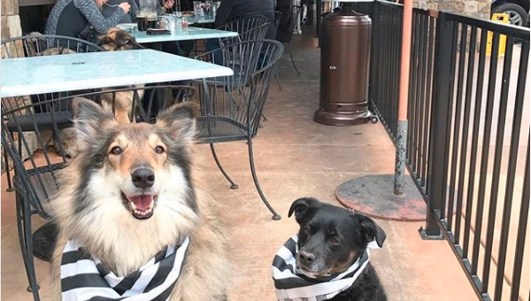10 Best Dog Friendly Restaurants In Santa Barbara The People