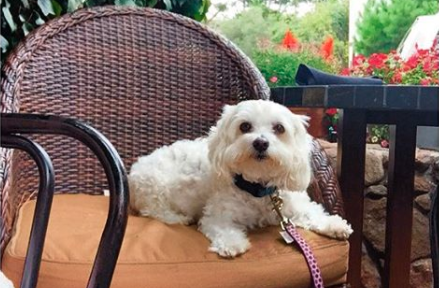 Top 10 Dog-Friendly Restaurants in Carmel