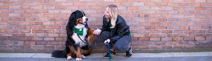 Denver Dog Sitting Jobs | Rover com