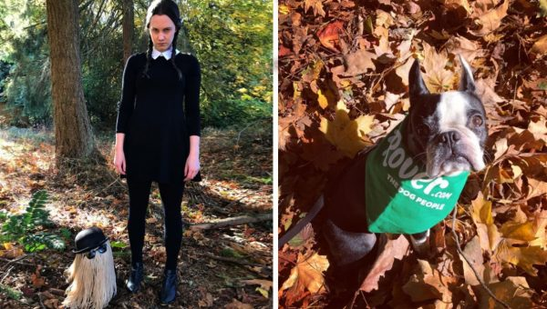 Dog Lover Shows Off 7 Years of Incredible Matching Costumes with her Boston Terrier