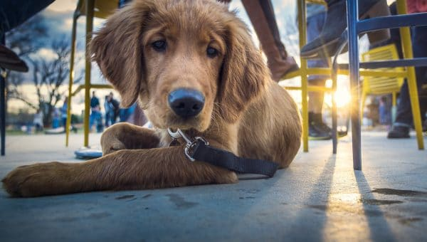 Top 10 Dog-Friendly Restaurants in Portland