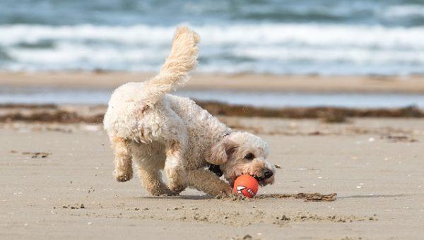 Top Dog Beach in Manasquan, NJ