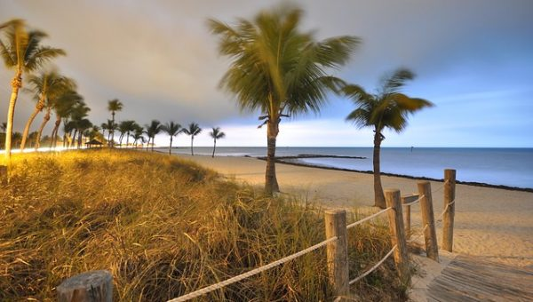 7 Best Dog-Friendly Beaches in Palm Beach