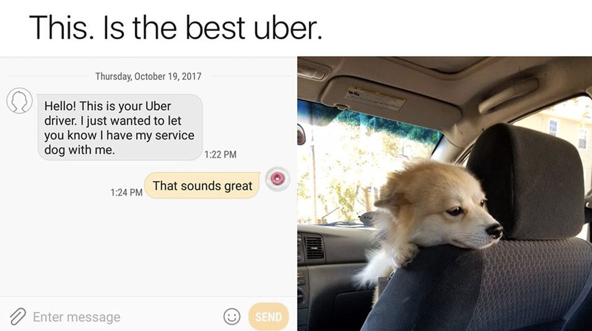 Our Top 10 Most-Read Viral Dog Stories of 2017 | The Dog People by