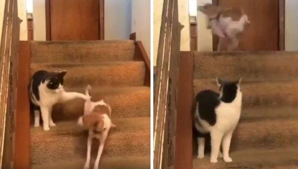 Cat Discovers Dog's 'Turbo Button', Is Shocked at Results