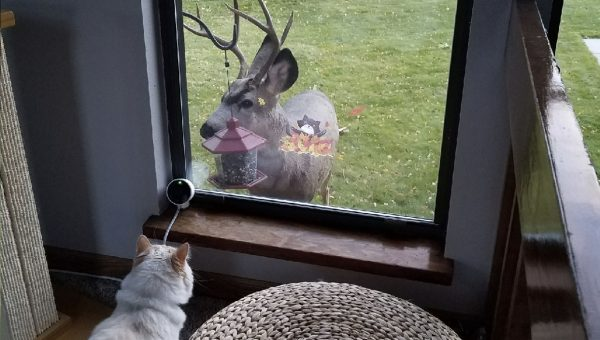 Pet Cam Captures Magical Parade of Animals Visiting Cat's Window Perch
