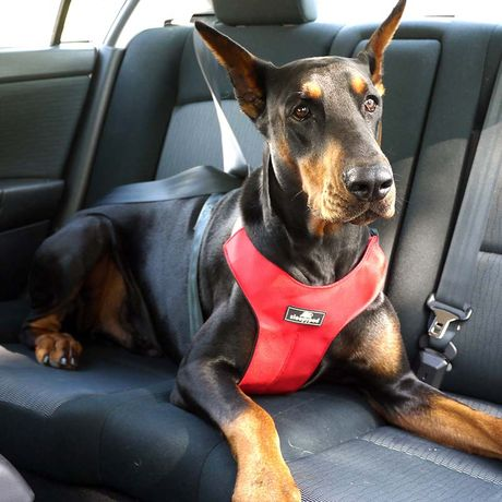 Dog Seat Belt Harness >> Everything You Need To Know About Dog Car Seat Belts