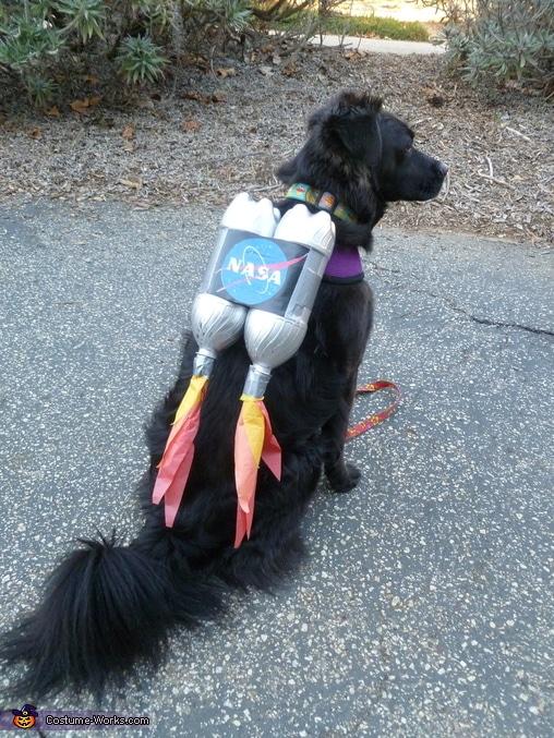 dog wearing DIY rocket costume