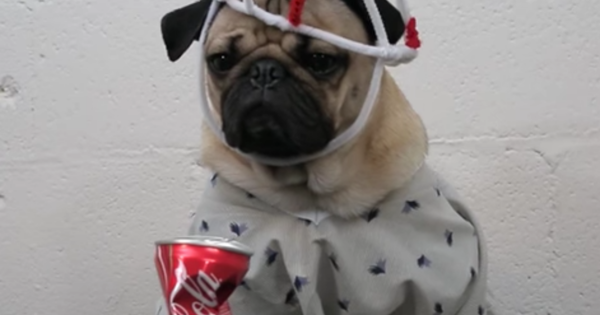 12 Diy Stranger Things Dog Costumes For Halloween The