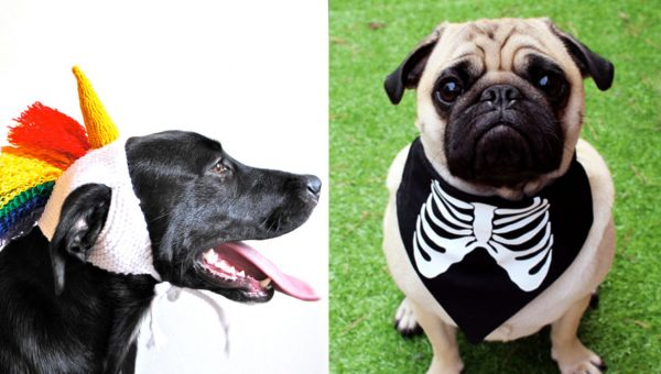 You Can Get a Perfect Dog Halloween Costume on Etsy (Even for Dogs That Hate Costumes)