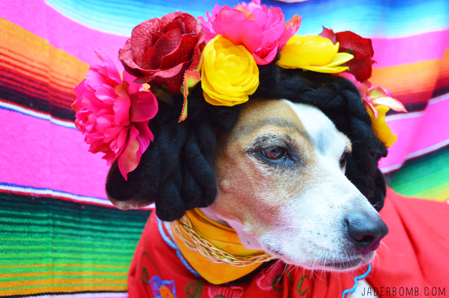 A dog dressed in a DIY dog costume that makes her look like Frida Kahlo